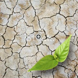 Greening the desert pic